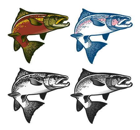Salmon Fish - Vector Illustration. Logo Template. Vintage Salmon Fishing emblems, labels and design elements.  Vector illustration.  イラスト・ベクター素材
