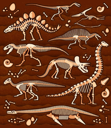 fossils: Pattern of Skeletons of dinosaurs and fossils. Vector illustration.