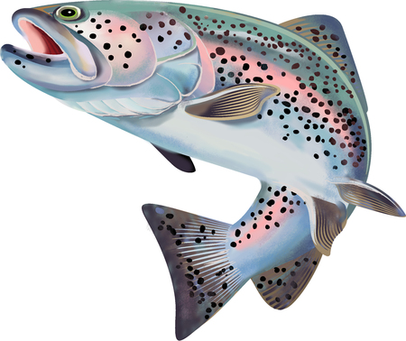 Ilustracja ryby pstrąga. Kolorowa ilustracja ze szczegółami Zdjęcie Seryjne