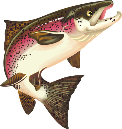 Ilustración de pescado salmón