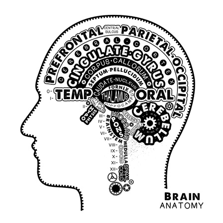 Brain Anatomy Typographic Artwork. Inspirational Vector Illustration. Stok Fotoğraf - 118847192