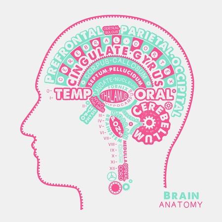 Brain Anatomy Typographic Artwork. Vector Illustration