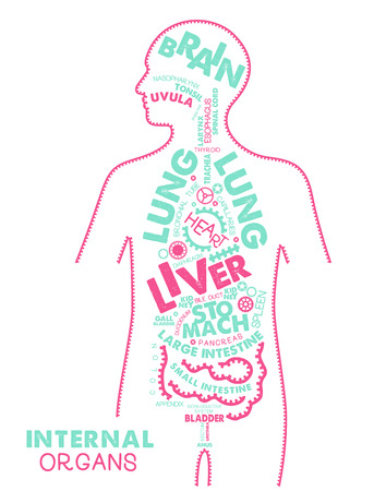 Internal Organs Typographic Artwork. Didactic Board of Anatomy of Human .Vector Illustration