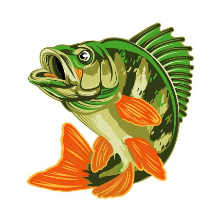 Eurasian River Yellow Perch Fish.Bass Fishing Isolated on White Background. Illustration.