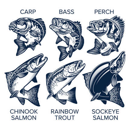 Set of Fish Emblems Vintage Style. Carp, Bass, Perch, Chinook Salmon, Rainbow Trout, Sockeye Salmon Vector Illustrations. 向量圖像