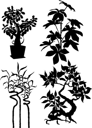 silhouettes of plants photo