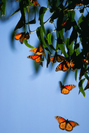 cold blooded: butterflies Stock Photo
