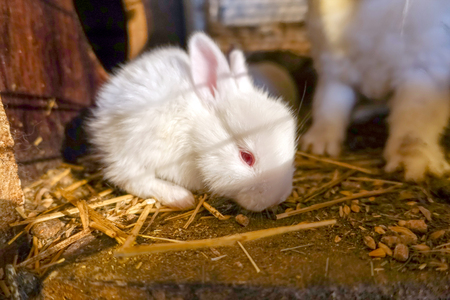 White little rabbit in a cage in the shed