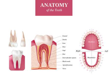 Oral Care health Concept. Medical banner or poster