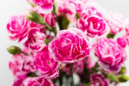 Bunch of pink small roses photo