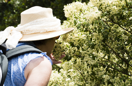 appreciating: Mature woman in white hat appreciating flowers Stock Photo