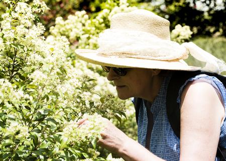 appreciating: Mature woman appreciating white blossoms Stock Photo