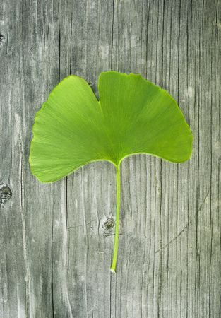 surface tension: ginkgo leaf on old wood Stock Photo