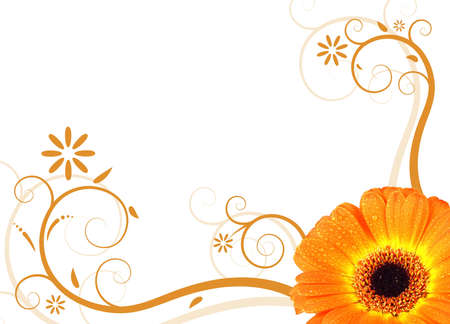 fresh orange gerbera blossom with illustrated floral design