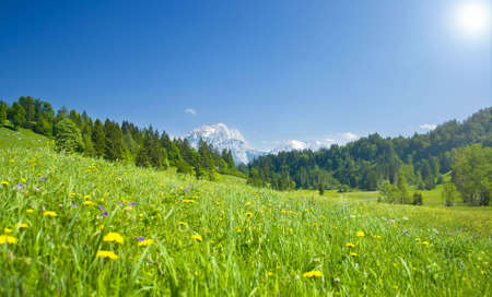 austrian landscape with meadows and mountains in the springtime Standard-Bild