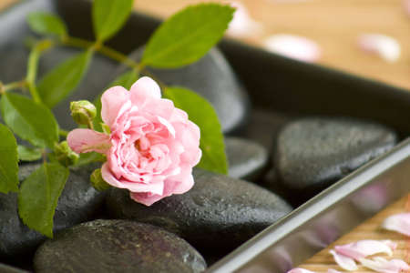 black stones with water drips and a beautiful rose Stock Photo