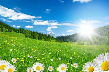 prato montagna: primavera sulle Alpi con fiori e cielo Archivio Fotografico
