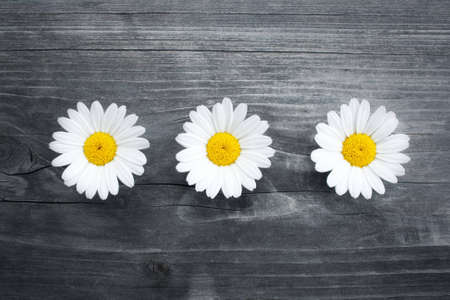 three daisy flowers on a old piece of wood