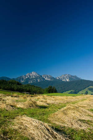 bavarian landscape with beautiful mountains and corn field
