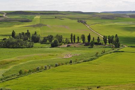 Fields of Castilla y Leon, Montealegre de Campos, Valladolid, Spain
