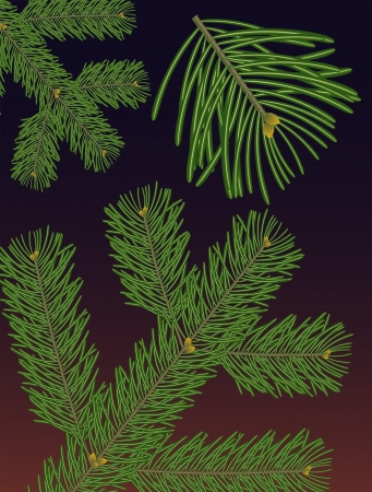 close-up, detailed rendering of a branch of a douglas fir tree   Pseudotsuga menziesii   Illustration