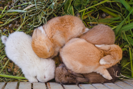 Cute rabbit family,Mother and newborn baby sleep in farm.easter bunny day.