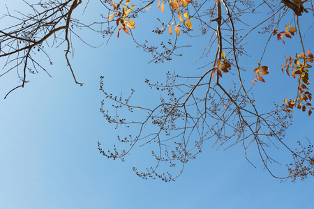 Branches with leaves of the tree on blue sky background, ants eye view, with copy space.