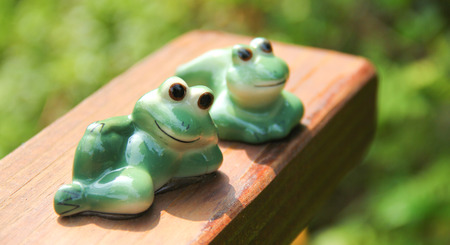 Relaxing Frogs photo