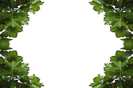 잎 사진 프레임 케이스 스톡 콘텐츠