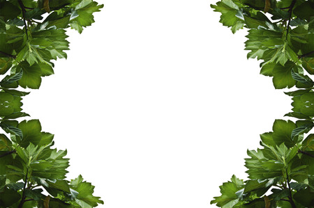Leaf Photo Frame Case photo