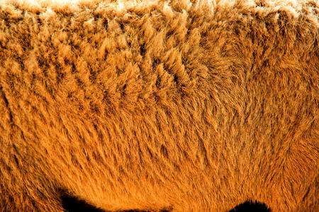 Wool Texture Imagens