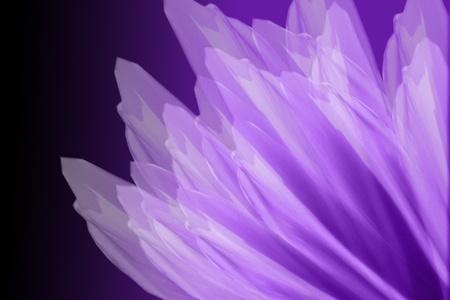 Paarse bloem bloemblaadjes