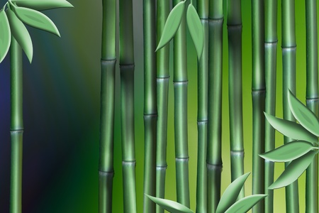 Abstract art made up of a few stalks of bamboo and a few leaves Stock Photo - 13073737