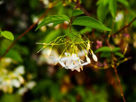 Beautiful white flowers Could not find  word to describe. This  what nature created Reklamní fotografie