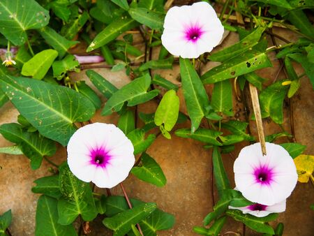 beauty of nature, pink flowers on the ground