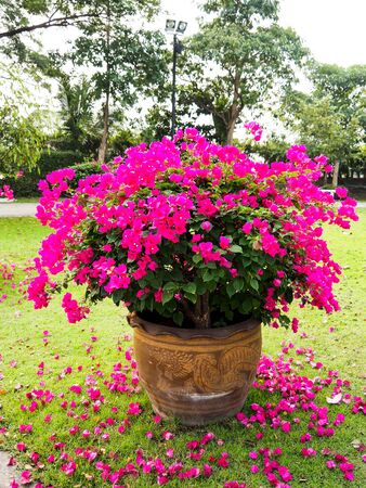 beauty of nature, pink flowers that are falling