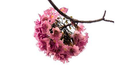 flower is a representative of nature. Reklamní fotografie