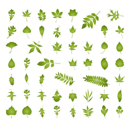 종류: Various kind of natural leaf