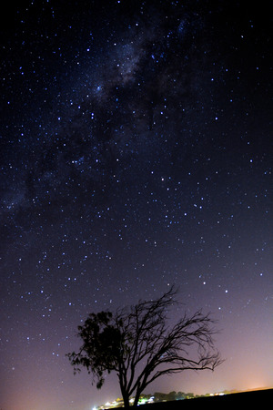 starry night: A lonely tree under starry night sky