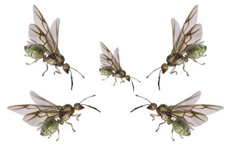 formic: hormigas verdes