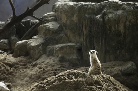 sentry: mereket  in zoo