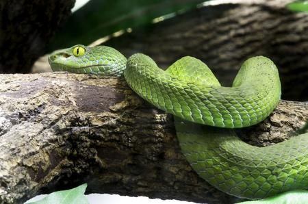 snake eye photo
