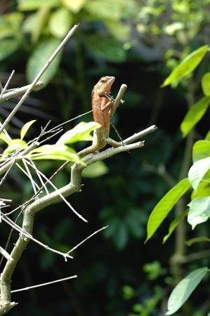 chameleon on tree photo