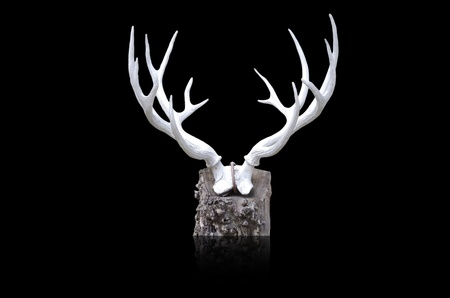 deer horn photo