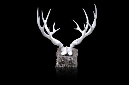 whitetail buck: deer horn Stock Photo