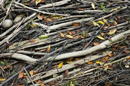 wood scraps photo