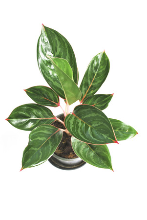 houseplant: houseplant Stock Photo
