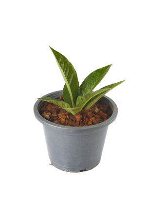 seedling in pot photo