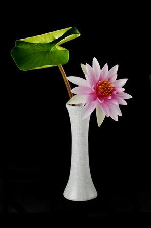 lotus in vase photo