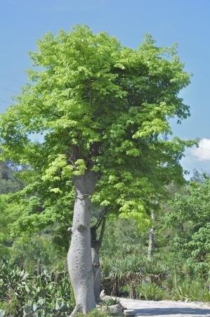 singal moringa close up in a blue sky background